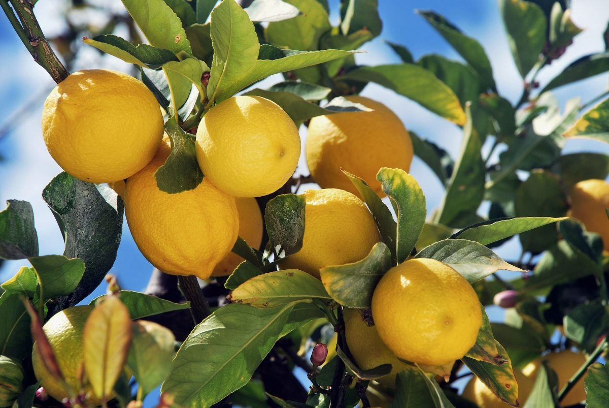 Lemon anti-cancer power/MelRoseLifestyle